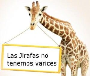Las jirafan no tienen varices ni ulcera venosa