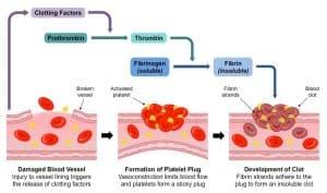 Esquema coagulacion sanguinea